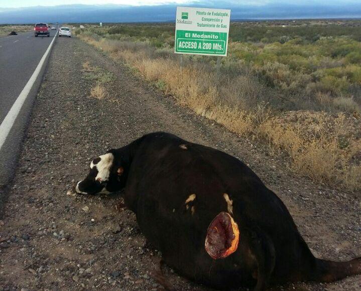 Vaca Muerta Ruta