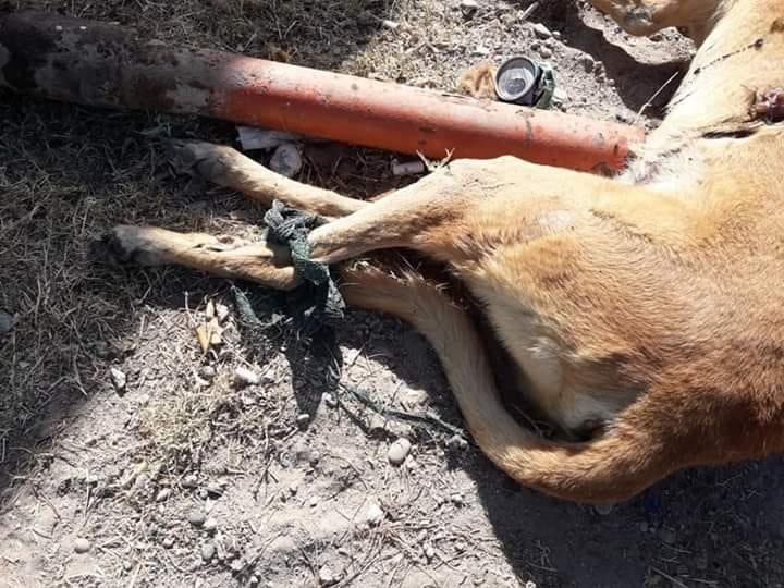 Catriel25Noticias.com 50549179_1193542280815187_4193220302441807872_n Aberrante: Envenenaron y mutilaron a un perro Destacadas LOCALES