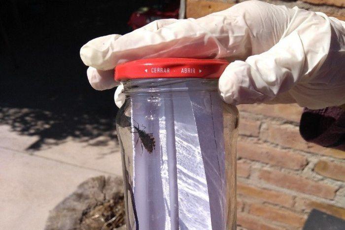 Catriel25Noticias.com chagas1 Río Negro libre de Chagas PROVINCIALES SOCIEDAD