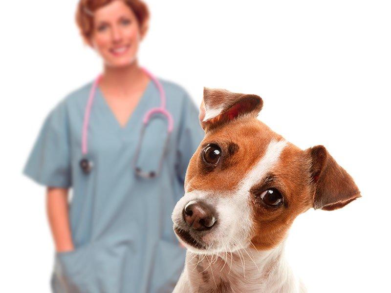 Catriel25Noticias.com mascotas-esterilizan Vacuna antirrábica gratuita. Veterinarias habilitadas LOCALES