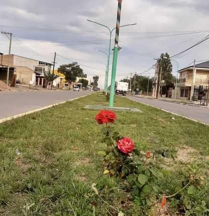 Catriel: fueron fotografiadas cuando robaban plantas y macetas en bulevares